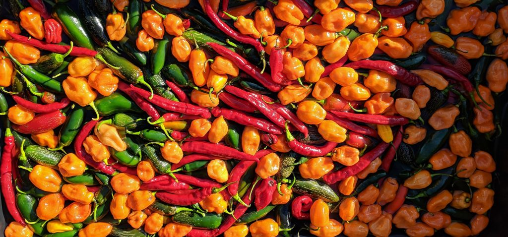 hot chilli peppers used for craic sauce